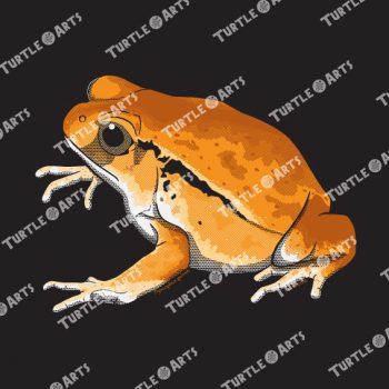Frogs/Toads Model 3, Dyscophus guineti, ARTWORK