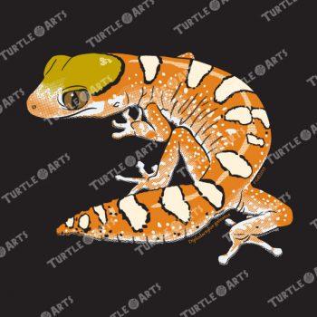 TLM1a Diplodactylus galeatus artwork
