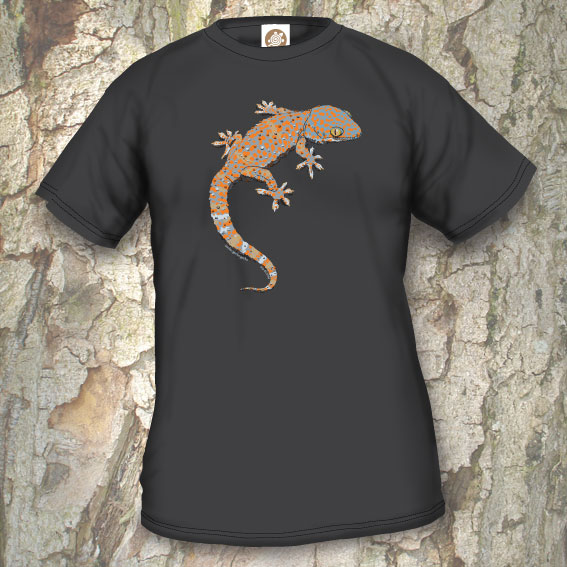 TLM2 Gecko gecko gecko
